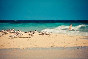 White Islet, Camiguin