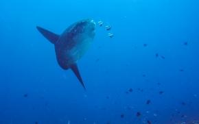 Bali, Indonesia, Scuba Diving