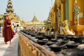 Shwedagon Pagoda Yangon, Rangoon, Myanmar, Burma, Monk